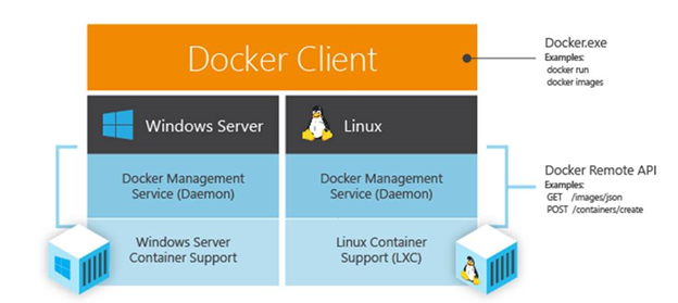 Docker will work on Windows and Linux