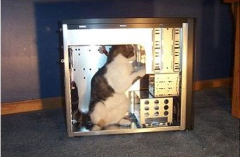 It's a cat in a computer. That's a MEME.